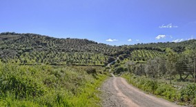 Campo-track-leaving-Ronda-heading-south.jpg